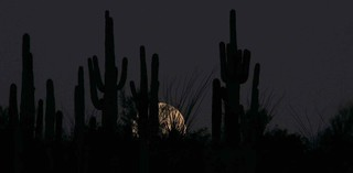 Moon setting over Saguaros; SE of San Manuel, AZ | by Lon&Queta