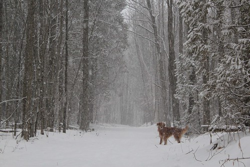 snow falling on cedars and conflicting perspectives