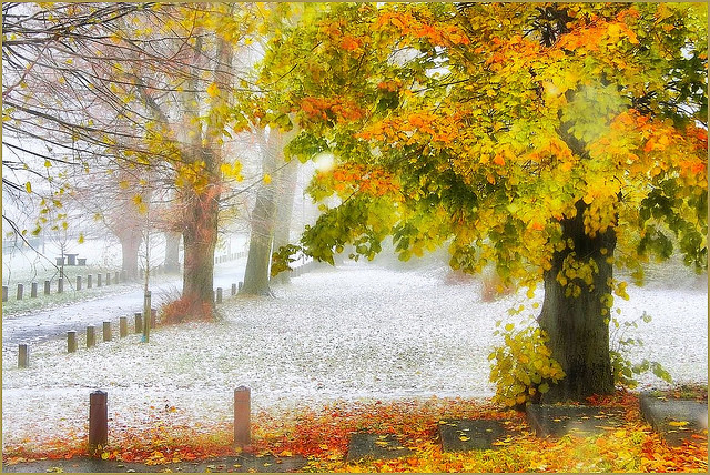 GOODBYE AUTUMN, HELLO WINTER. | By Edward Dullard Photography. Kilkenny,  Ireland.