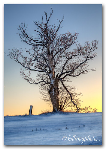 Tree and Standing Stone | by Bill McKenzie / bmphoto