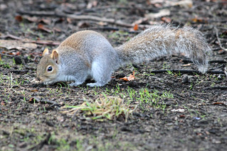 Squirrel - The Search Is On | by Jon Pinder