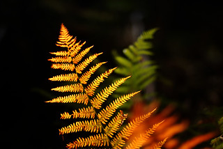 Tricolore Ferns | by patchworkbunny