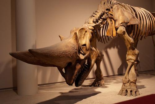 Animal skeleton | Benoit Dupont | Flickr