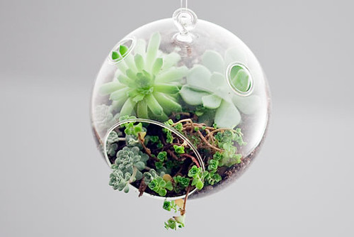 New inspiration: Mini Terrariums To Decorate Your Indoor Space by Botany Factory | by New Inspiration Home Design