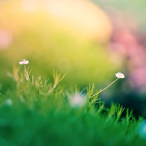 grass | by ►CubaGallery