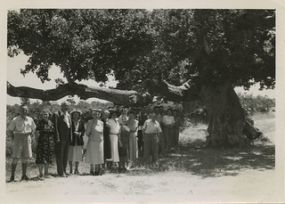 The Henrietta Szold Tree | by Center for Jewish History, NYC