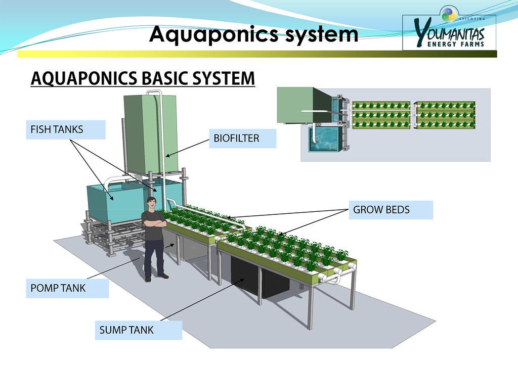Dutch Aquaponics Basic System Explanation Kweekprodukten A Flickr