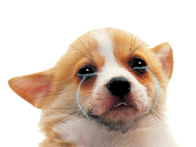 Puppy Cries The Poor Puppy Cries Dayne Jaeger Flickr