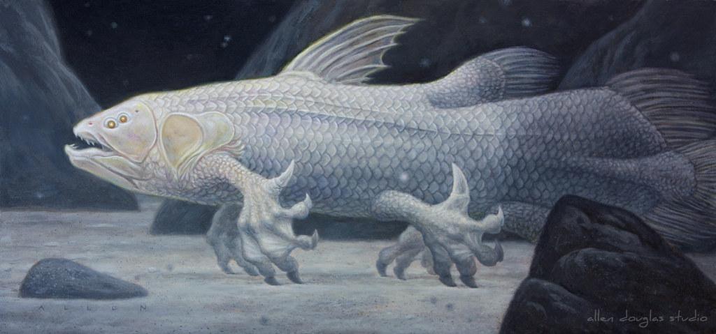Mermaid Evolution: Stage 1