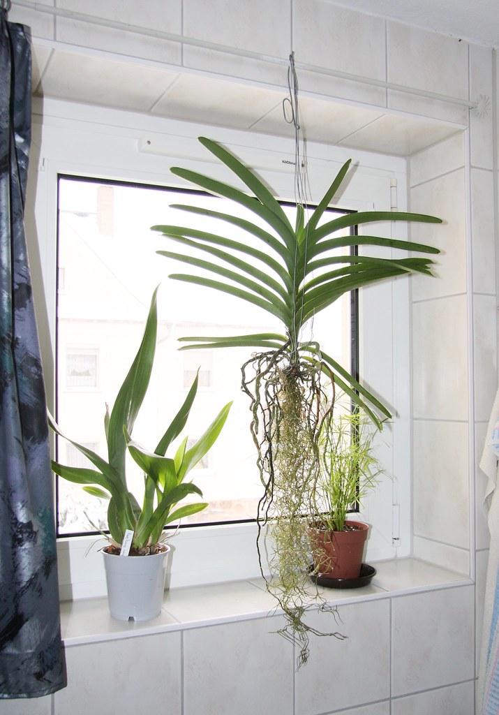 Great Pflanzen Im Bad | By Blumenbiene Pflanzen Im Bad | By Blumenbiene