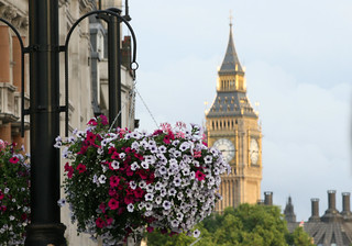 Hanging basket Trafalgar Square London | by Mukumbura