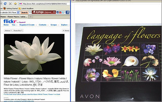 Explored by AVON: White Lotus - Avon 2011 Language of Flowers Calandar - Avon2011 | by Bahman Farzad