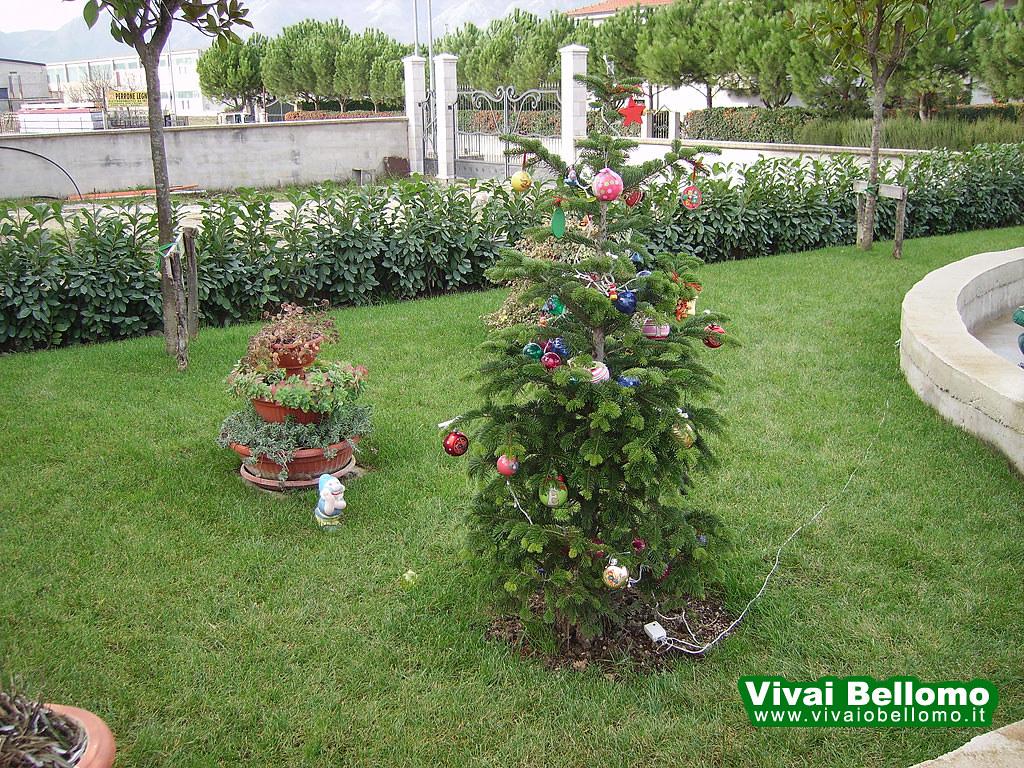 Giardino Con Loieto E Lauro Ceraso Vivai Bellomo Flickr