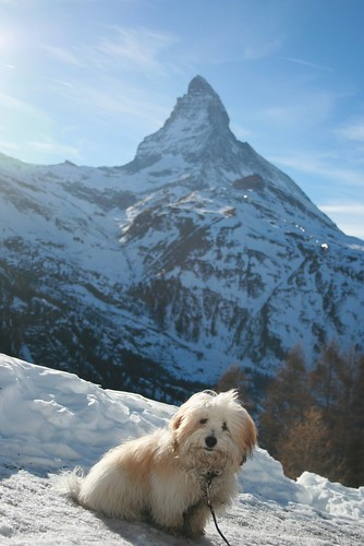 Ruben and the Matterhorn | by jbgranick