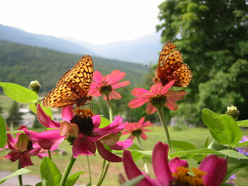 Butterflies | by Great Glen Trails