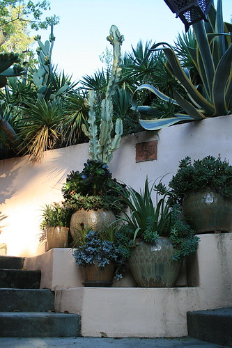 Pots with succulents at entry stairs from street | by David Feix Landscape Design