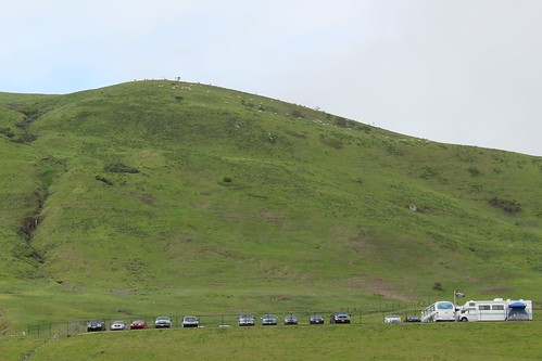 Sheep Grazing the hillside of Infineon Raceway | by audistyleracing