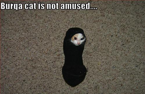 libyan cat is not amused | leiaamidon | Flickr