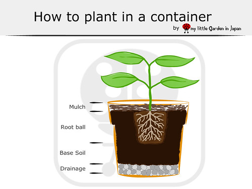 How-to-plant-in--a-container | by delcasmx