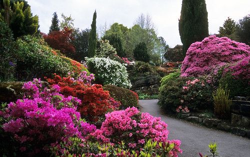 Leonardslee Gardens, West Sussex, England | Awesome Colors of Leonardslee Rock Garden with flowering Japanese azaleas and miniature rhododendrons in May (11of 14) | by ukgardenphotos