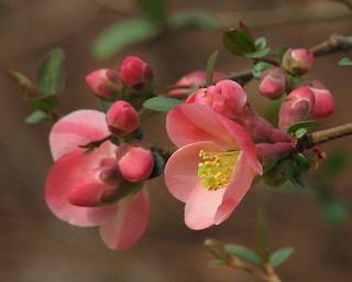 Blooms & buds | by Vicki's Nature