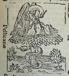 Woodcut of a pelican in her piety | by Provenance Online Project