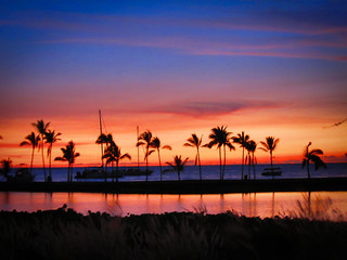 Hawaii Sunset Palm Tree Silhouettes | by nan palmero