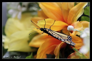 Macro-Butterfly - Part 2 | by Alakhai85