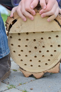 Make a mason bee nest | by learning as I go
