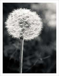 """A weed is just a plant whose virtues have not yet been discovered."" 