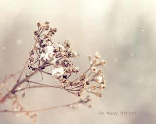 Go Away Winter | by {Arlene}