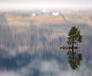 Beautiful little island with a lonely tree and a magic reflection | by Martin Ystenes - hei.cc