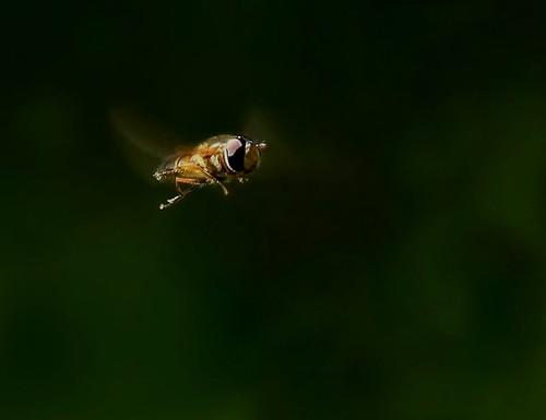 fly | by Signe09