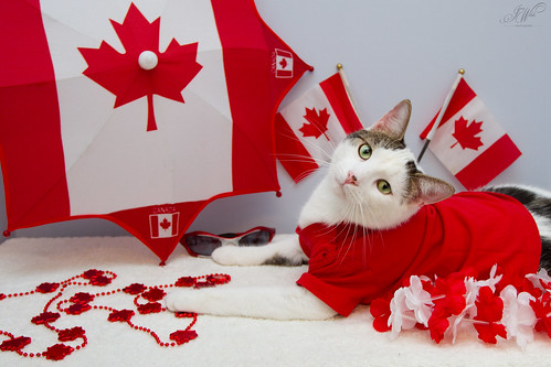 Happy birthday, Canada!! | by Jenn W (Jenn Wilson Pet Portraiture)