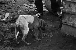 Free Dog Spaying Truro