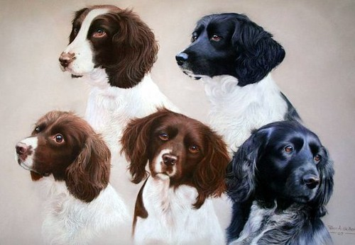David`s dogs | by Peter Skillen Art and Photography.