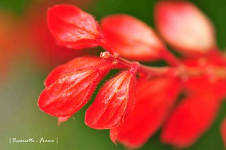 Red | by Bassisette