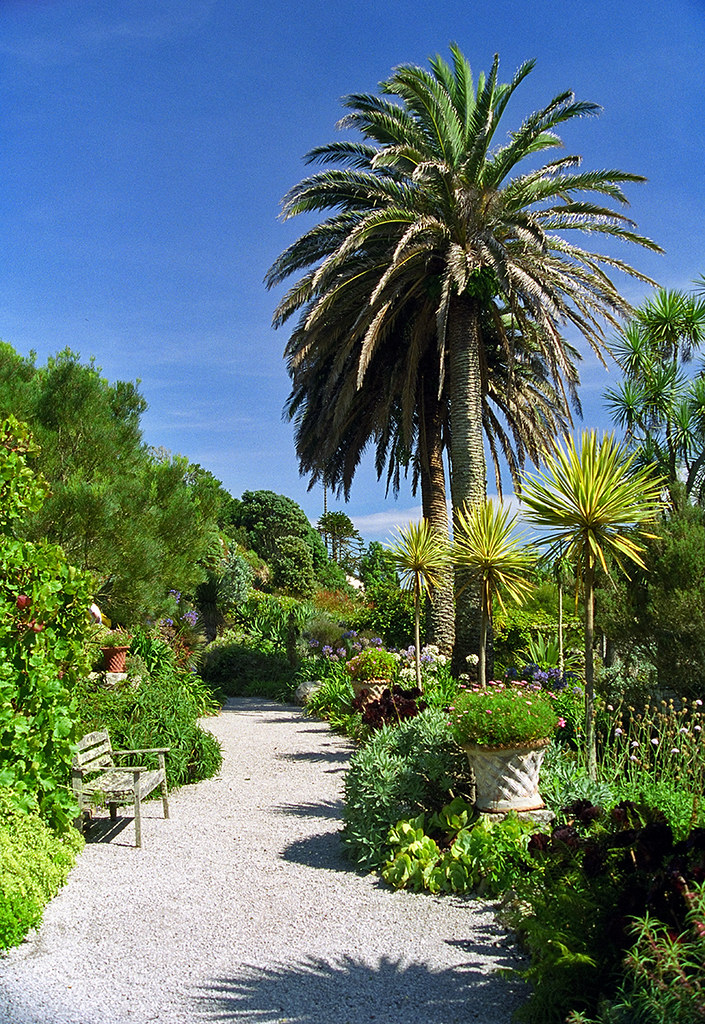 ... Tresco Abbey Gardens, Scilly Isles, UK | Palm Tree Lined Paths In This  Sub
