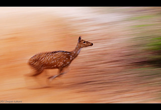 Deer in Flight | by Deepak Kul