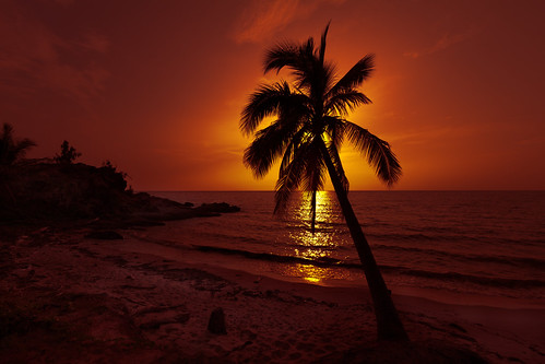 Port Douglas Sunrise - Palm Tree | Thala Beach, Port ...