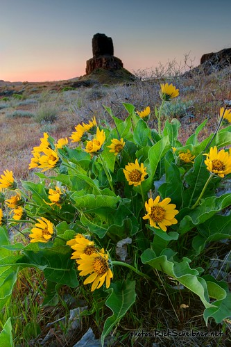 Wallula Flowers | by Desert Sun Images