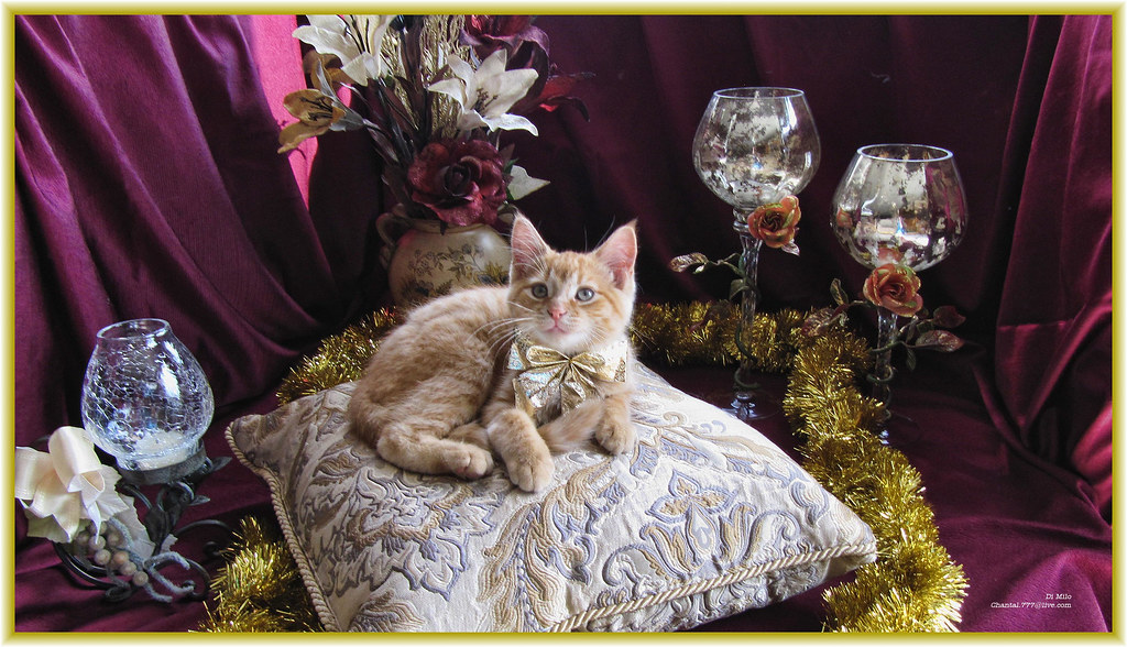 Kitty Chic ~ Cute Kitty Cat Kitten in Holiday Home Garden … | Flickr