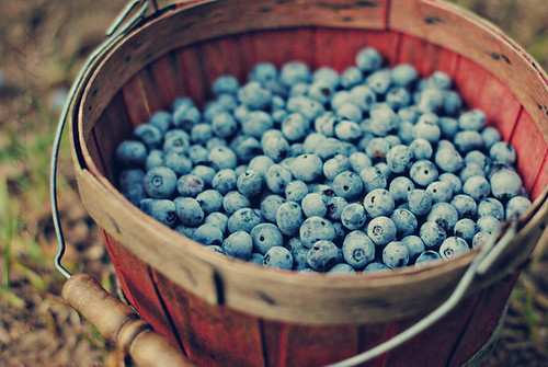 Blueberries | by Livvy Taylor