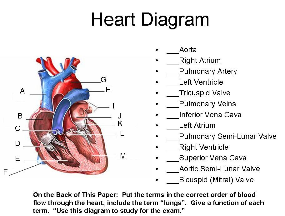 Heart diagram timothyakeller flickr heart diagram by timothyakeller heart diagram by timothyakeller ccuart