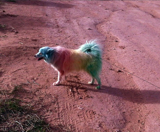 Rainbow dog | by dgans