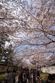 HANAMI --Cherry blossom viewing-- | by Teruhide Tomori