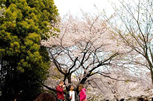 Cherry Blossom Viewing | by mitsu@PINKY