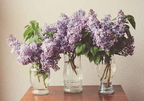 lovely lilacs. | by brightside photography
