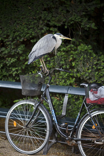 Heron Bicycle | by Mikael Colville-Andersen
