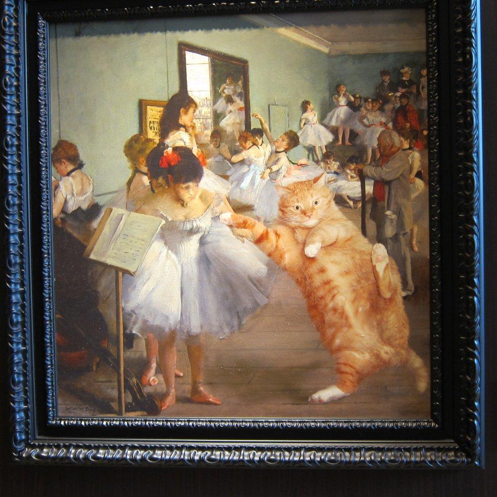 """The dance class metropolitan Cat"""